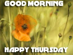 Thursday Good Morning Photo Pictures Wallpaper Download