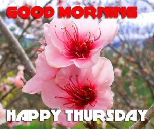Thursday Good Morning Photo Images Wallpaper HD Download