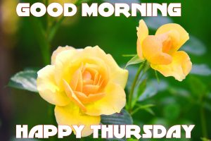 Thursday Good Morning Images Photo Pictures HD