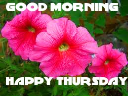 Thursday Good Morning Pics Photo Images With Flower