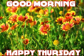 Thursday Good Morning Photo Images Pictures For Beautiful Flower