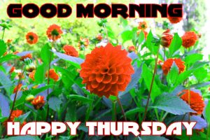 Thursday Good Morning Pics Images Photo Download For Whatsapp