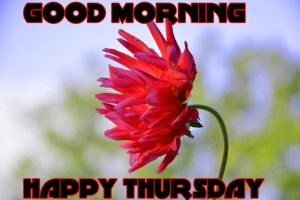 Thursday Good Morning Photo Images Pics Download