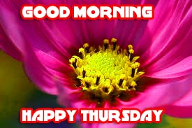 Thursday Good Morning Pictures Wallpaper Photo Download