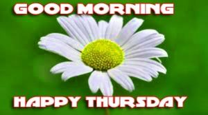 Thursday Good Morning Pictures Photo Images With Flower