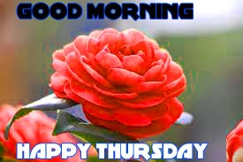 Thursday Good Morning Pics Photo Images HD Download