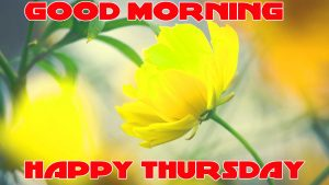 Thursday Good Morning Photo Images Wallpaper With Flower