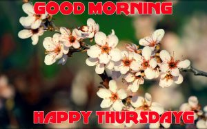 Thursday Good Morning Pictures Photo Wallpaper Download