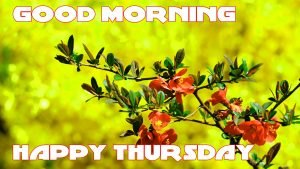 Thursday Good Morning Pics Photo Images HD