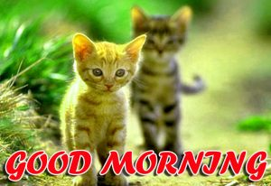 Best Latest Good Morning Images Photo Wallpaper Download For Whatsapp