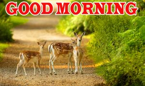 Nature Good Morning Wallpaper Pictures Images Free Download