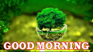 Nature Good Morning Images Photo Wallpaper For Facebook