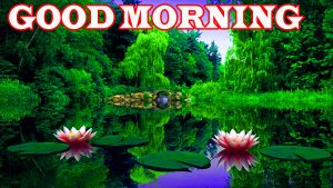 Nature Good Morning Pictures Images Pictures HD Download