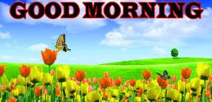 Nature Good Morning Pictures Images Photo HD Download