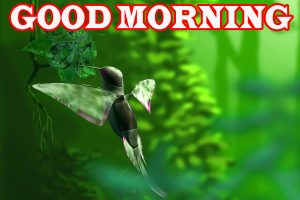 Nature Good Morning Photo Wallpaper Free Download
