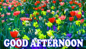 Good Afternoon Pictures Images Photo Free Download