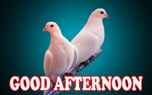 Good Afternoon Photo Images Wallpaper For Facebook