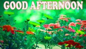 Good Afternoon Wallpaper Pictures Images Free Download