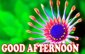 Good Afternoon Images Photo Wallpaper For Best Friend