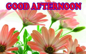 Good Afternoon Pictures Wallpaper Photo Download