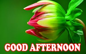 Good Afternoon Pictures Images Photo HD