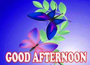 Good Afternoon Photo Wallpaper Images Free Download