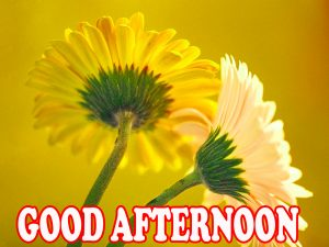 Good Afternoon Wallpaper Pictures Photo Download