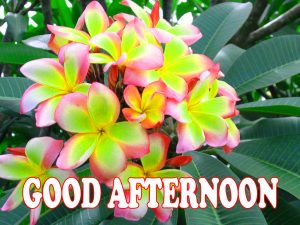 Good Afternoon Images Photo Wallpaper Download