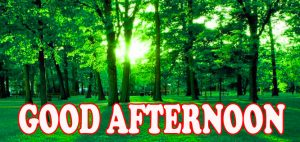 Good Afternoon Images Pictures Wallpaper For Facebook