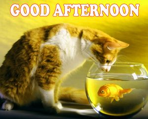 Good Afternoon Pictures Images Photo Wallpaper Download