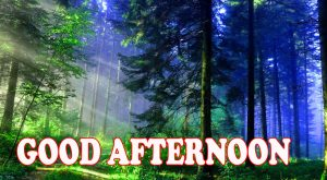 Good Afternoon Images Pictures Photo Free HD