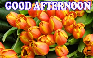 Good Afternoon Wallpaper Pictures Images Download