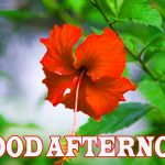 635+ HD Free Good Afternoon Images Wallpaper Pics Download