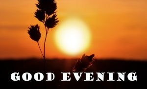 Good Evening Photo Images Pictures Download For Facebook