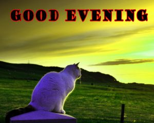 Good Evening Wallpaper Pictures Images Download For Facebook