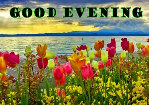 Good Evening Wallpaper Pictures Images HD Download