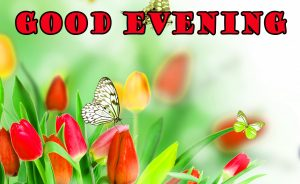 Good Evening Pictures Images Photo Download