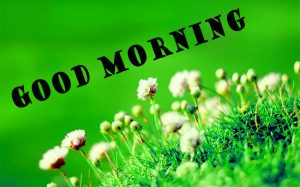 Latest Good Morning Photo Wallpaper Download