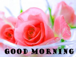 Latest Good Morning Pictures Images HD Download