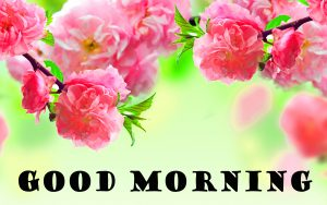 Latest Good Morning Wallpaper Pictures Images Download