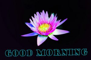 Latest Good Morning Pictures Images Photo With Flower