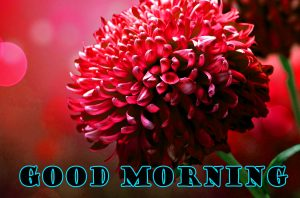 Latest Good Morning Pictures Images Photo Free HD