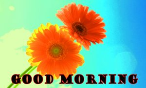 Latest Good Morning Pictures Wallpaper Photo Free Download