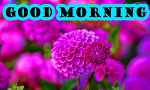 Latest Good Morning Wallpaper Pictures HD
