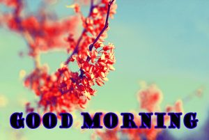 Latest Good Morning Photo Wallpaper Images Free HD Download