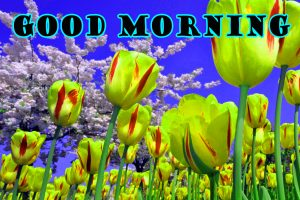 Latest Good Morning Wallpaper Pictures Images Free HD