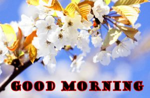 Latest Good Morning Pictures Images Download With Flower HD