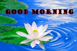 Latest Good Morning Wallpaper Pictures Images Free Download