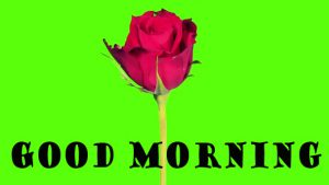 Latest Good Morning Photo Wallpaper Images Download