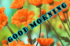 Latest Good Morning Pictures Images Photo HD Download